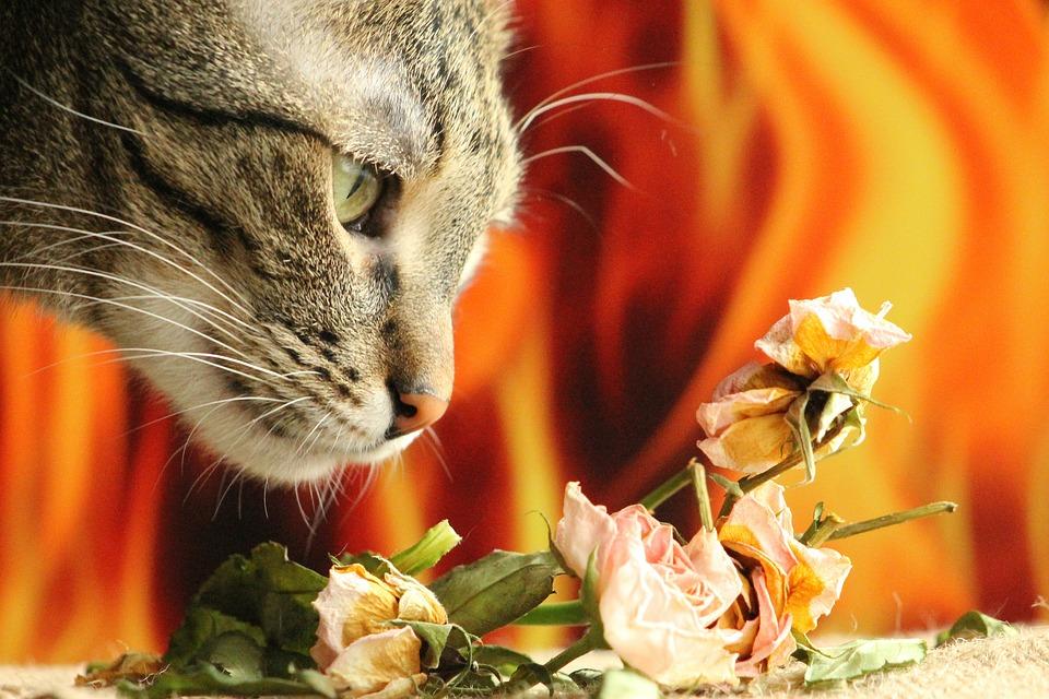 cat-1225760_960_720.jpg