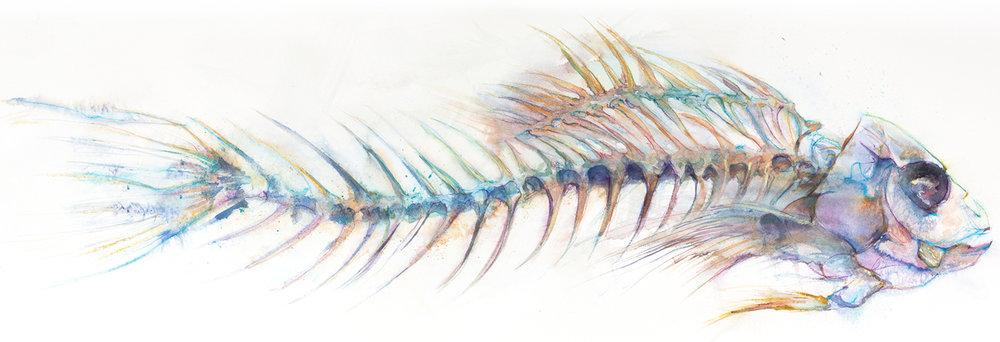 Blue Skeleton - approx 1.25m wide x 60cm deep.   SOLD