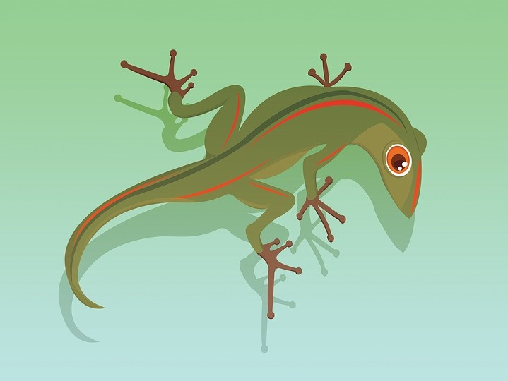 lizard-2708667_960_720.jpg