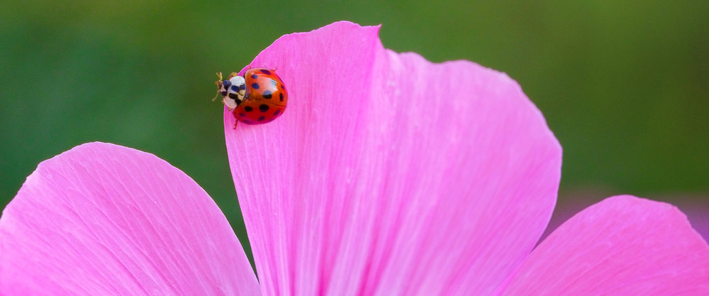 Natur verlag - Nature Photography