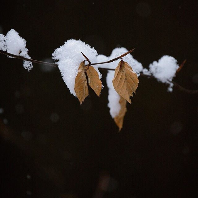 The dark days of winter.  _ _ #forest #woods #snow #january #nature #winter #dark #switzerland #schweiz #branch #leaves #photography #fujifilm #xt2