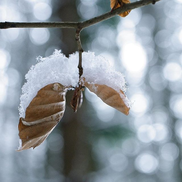 Waldbokeh  _ _ #bokeh #bokehballs #forest #woods #snow #snowflakes #january #nature #winter #switzerland #branch #leaves #photography #fujifilm #xt2 #closeup