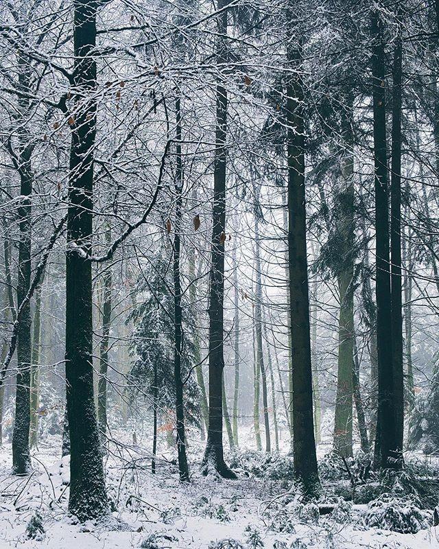 Winterwald  _ _ #woods #snow #forest #landscape #switzerland #schweiz #february #photography #fujifilm #xt2 #xf1855 #nature #cold #winter #calm #peaceful