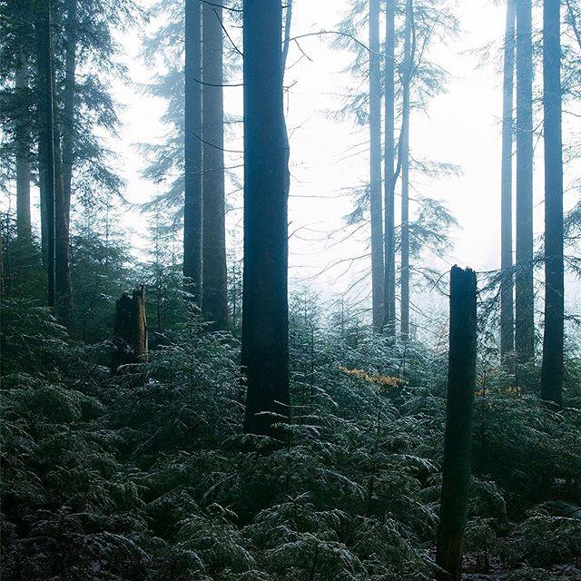 Die Welt is eine andere, wenn sie im Nebel zu versinken scheint. Geräusche und Farben verändern sich, sogar die Luft wird spürbar. Kühl und feucht, mit einer ganz anderen Energie geladen. - The world is different when it's submerged in fog. Sounds and colours change, one can even feel the air. Cold and humid, it seems to be charged with a different kind of energy.  _ _ #nebel #wald #natur #woods #woodland #fog #forest #trees #switzerland #schweiz #february #photography #fujifilm #xt2 #xf1855 #nature #cold #winter #calm #peaceful #mysterious #light