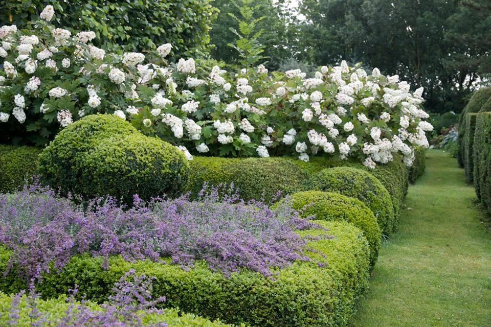 eikenblad hortensia voortuin.jpg