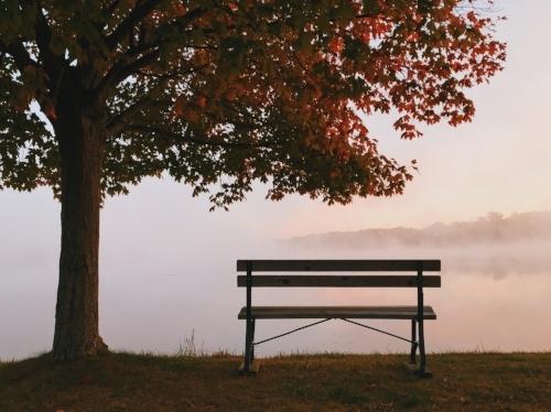 park bench in the sunlight.jpg