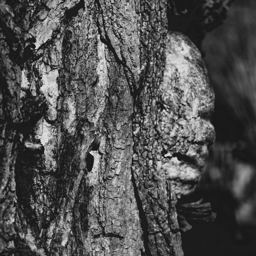 Pareidolia: Ghost of Winter
