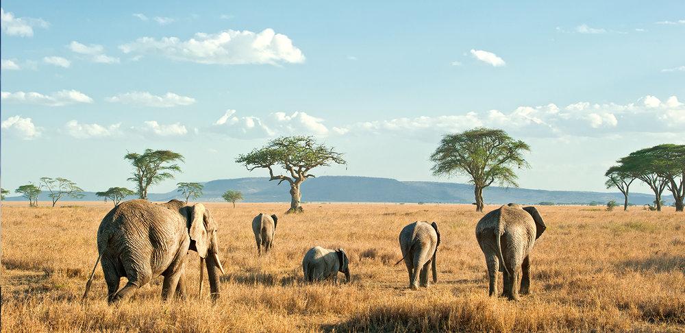 african_safari.jpg