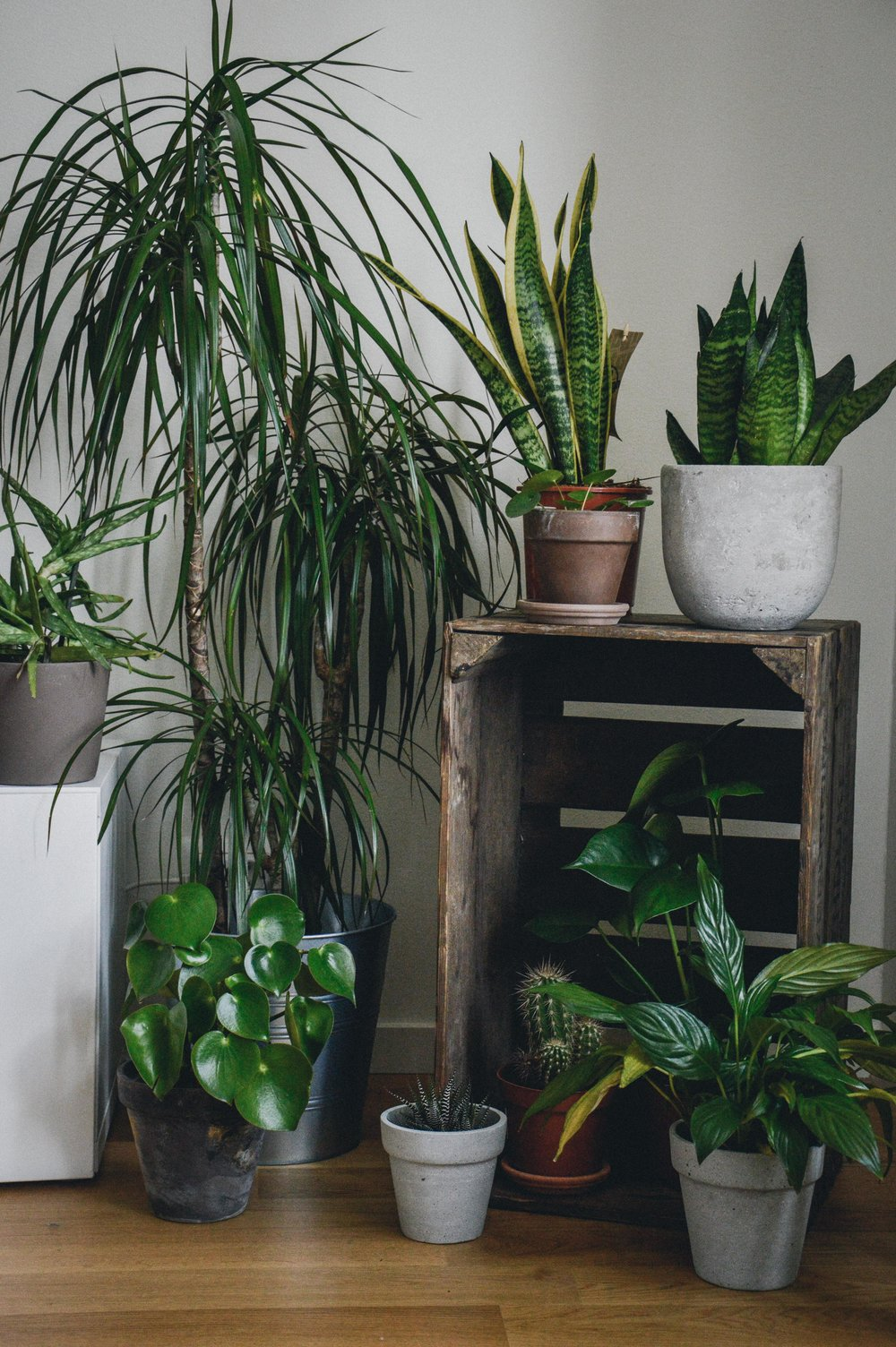 Indoor jungle | The Nordic Kitchen