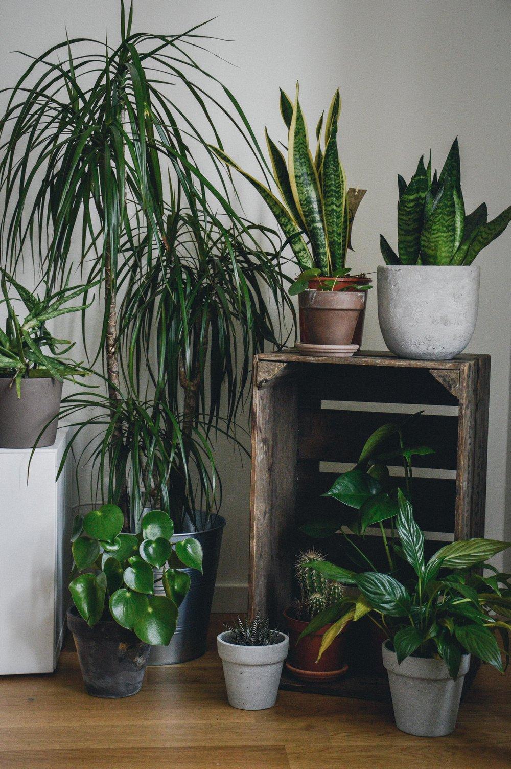 Indoor jungle | The Nordic Kitchen