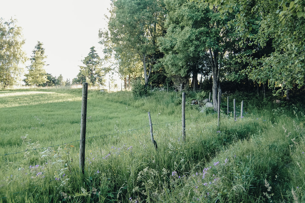 The_Swedish_Countryside_-003.jpg