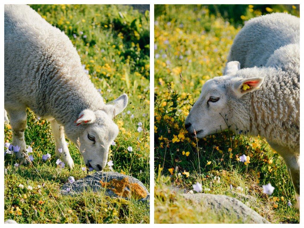 Lapland_Lofoten_TNK_-010-1000x750.jpg
