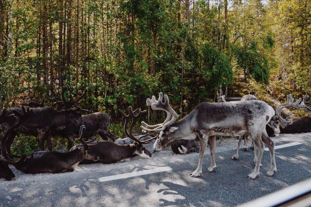 Lapland_Lofoten_TNK_-032-1000x665.jpg