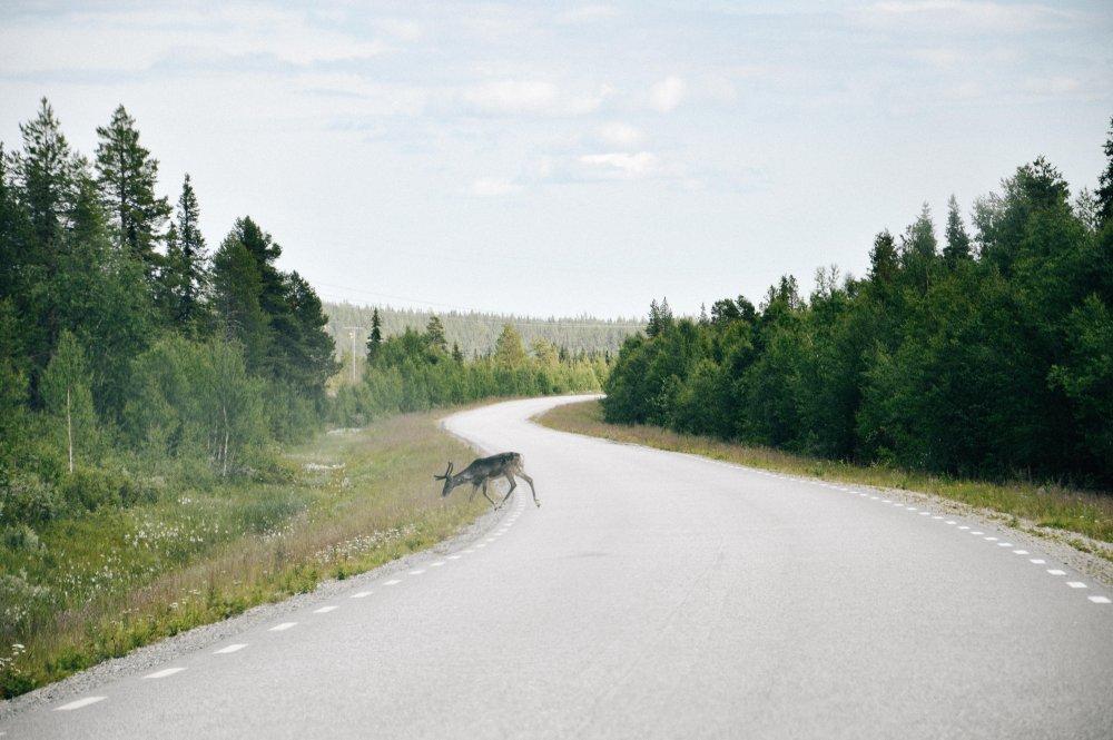 Lapland_Lofoten_TNK_-033-1000x665.jpg