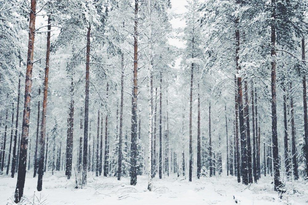 December_-002.jpg