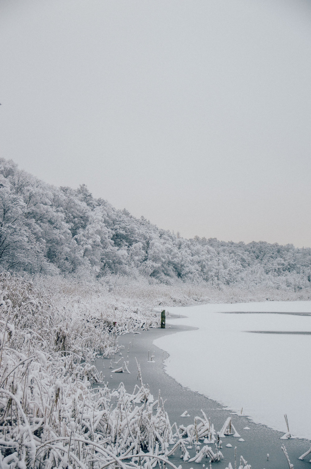Winter in Sweden | The Nordic Kitchen
