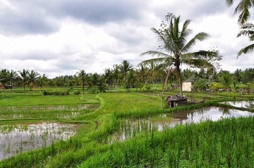 Bali D90 097.JPG