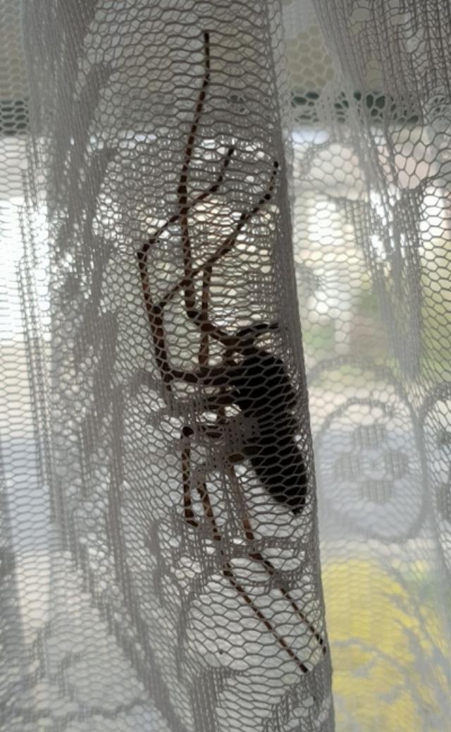 Elene Marsden House Spider.jpg