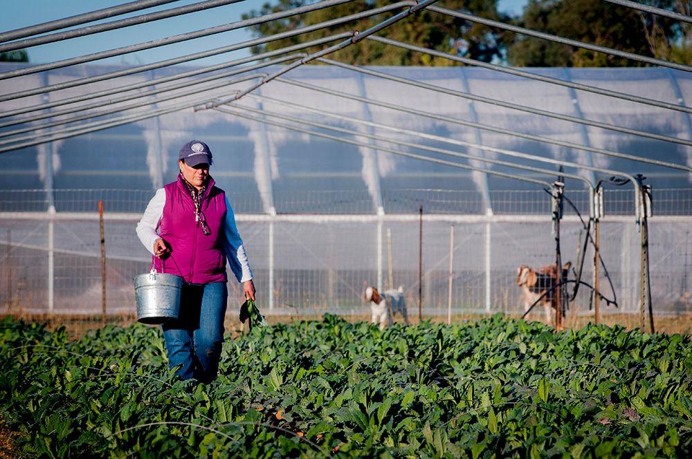 Local food is good for the environment. - Locally and sustainably produced food improves the health of our environment. Local agriculture builds healthy soils, which facilitates increased carbon sequestration and leads to cleaner air; less agricultural runoff keeps drinking water clean and improves wildlife habitats; and composting and recycling diverts food waste from landfills and reduces the amount of methane released into the environment. In fact, eating local is one of the single most impactful choices you can make to reduce your individual carbon footprint.