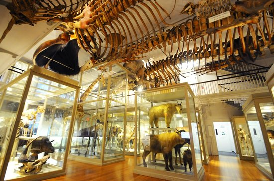Harvard Museum of Natural History - 16 Exhibits and 2,000 Glass Flowers. Come tour this fully accessible museum.