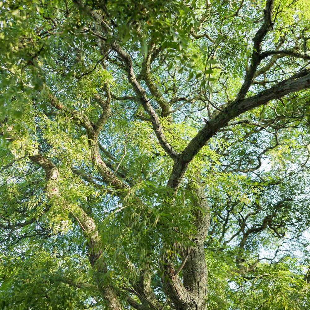树木修剪 - 了解更多