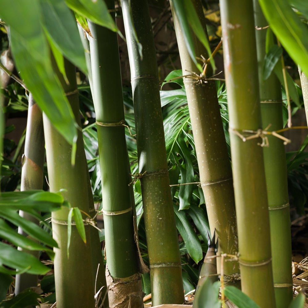 移除竹子 - 了解更多