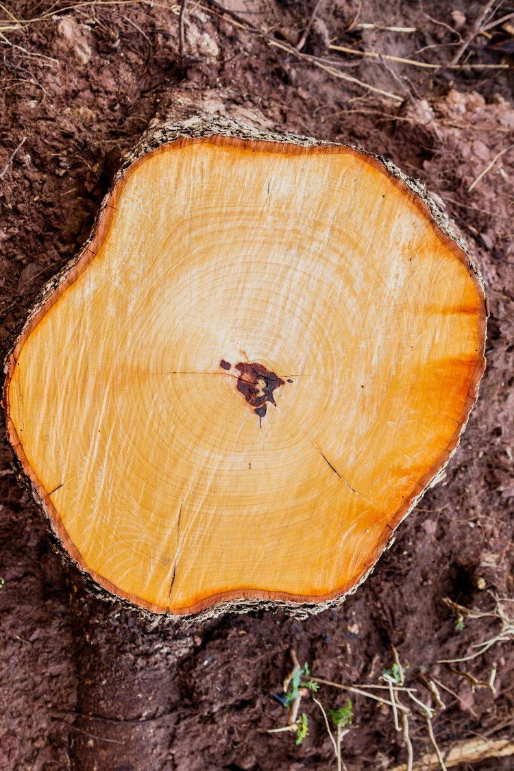 Stump-grinding-Tree-Fellas.jpg