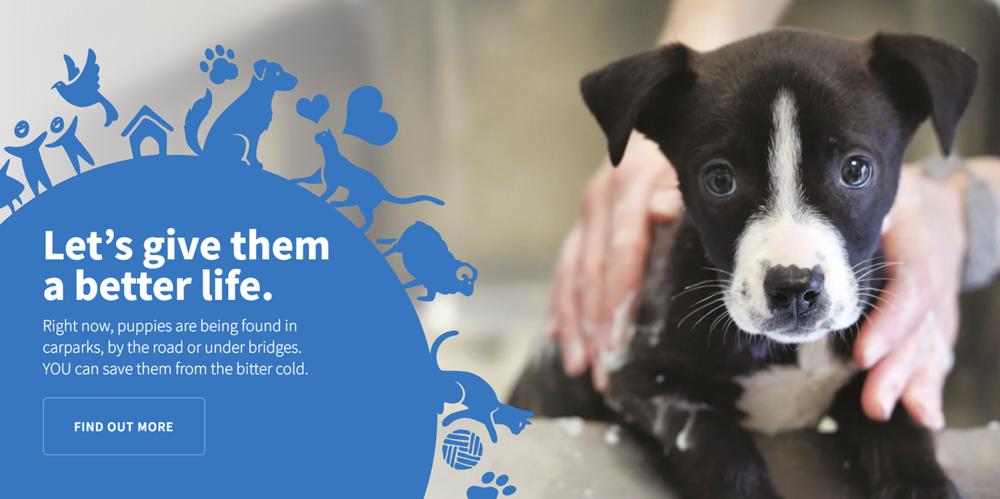 SPCA NZ -