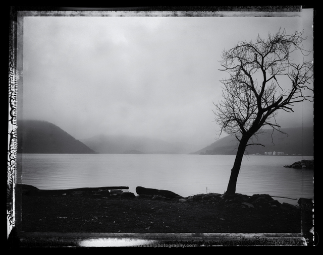 Peekskill_tree_Type55_Wet_1.3_Sharp.jpg