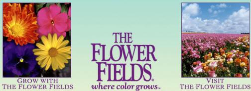 the_flower_fields.jpg