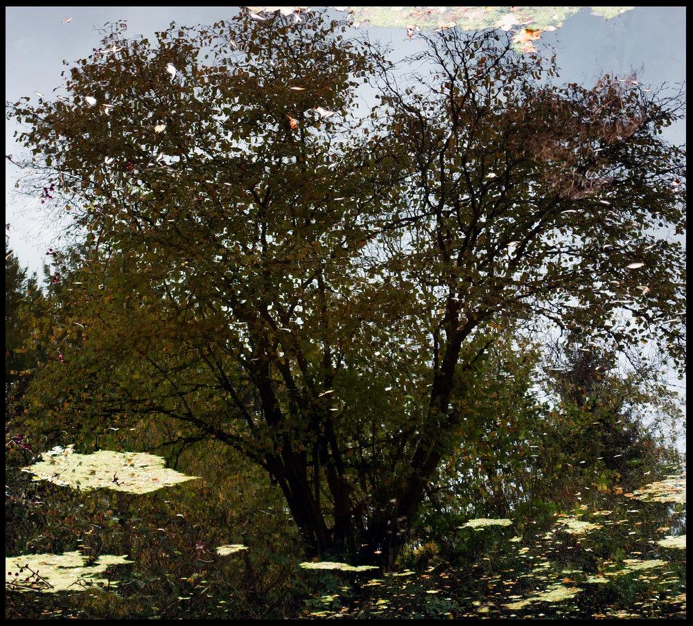Mirror Landscape 9