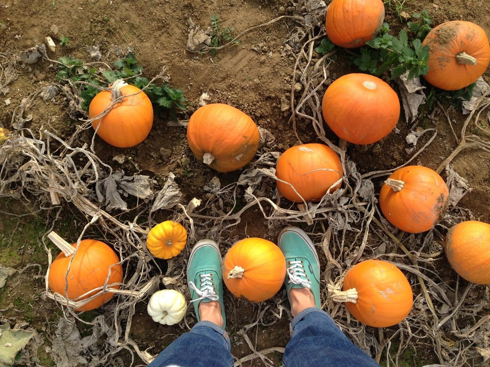 THE GREAT PUMPKIN RESCUE IS UPON US - Whether carving, eating or composting your pumpkin, there are hundreds of ways to join this seasonal celebration of food.