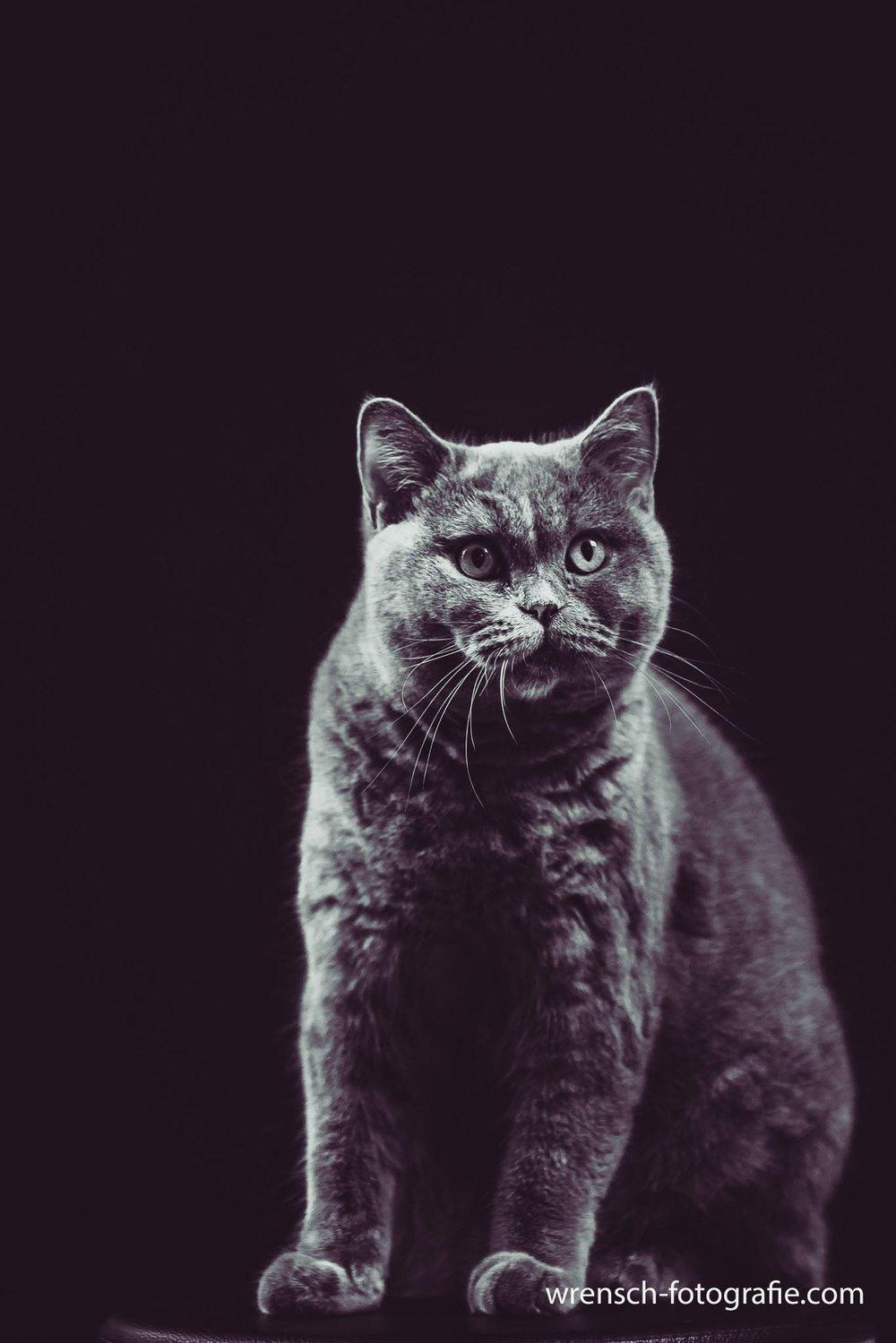 Marie: unsere feine Katzendame.