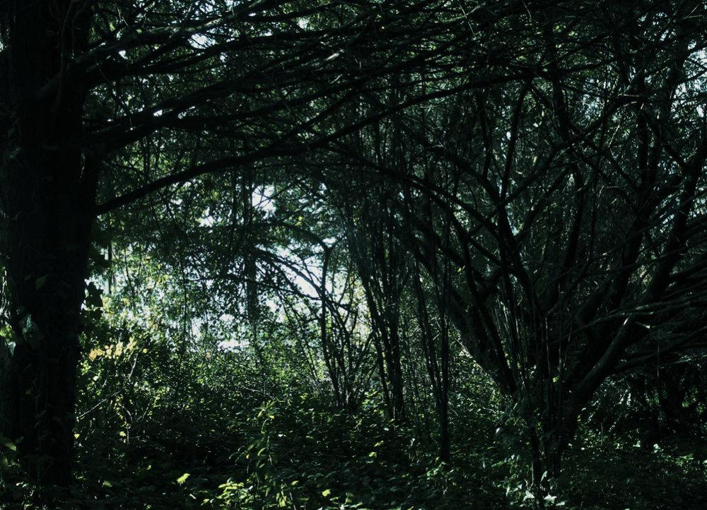 selva-urbana-6.jpg