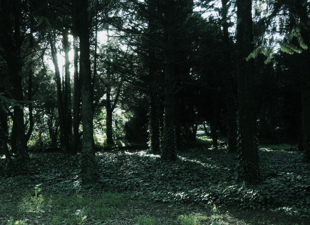 selva-urbana-11.jpg