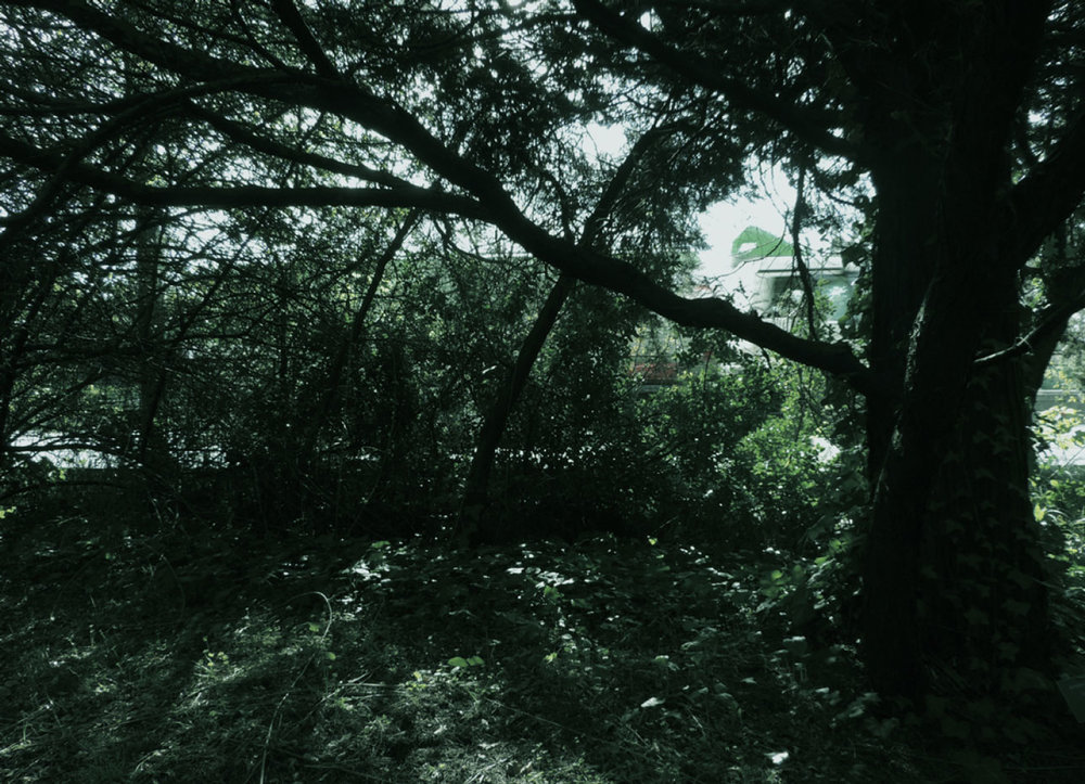 selva-urbana-12.jpg