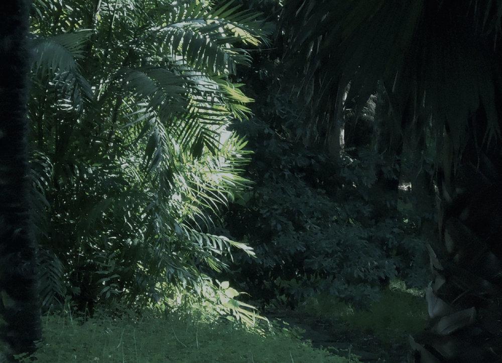 selva-urbana-15.jpg