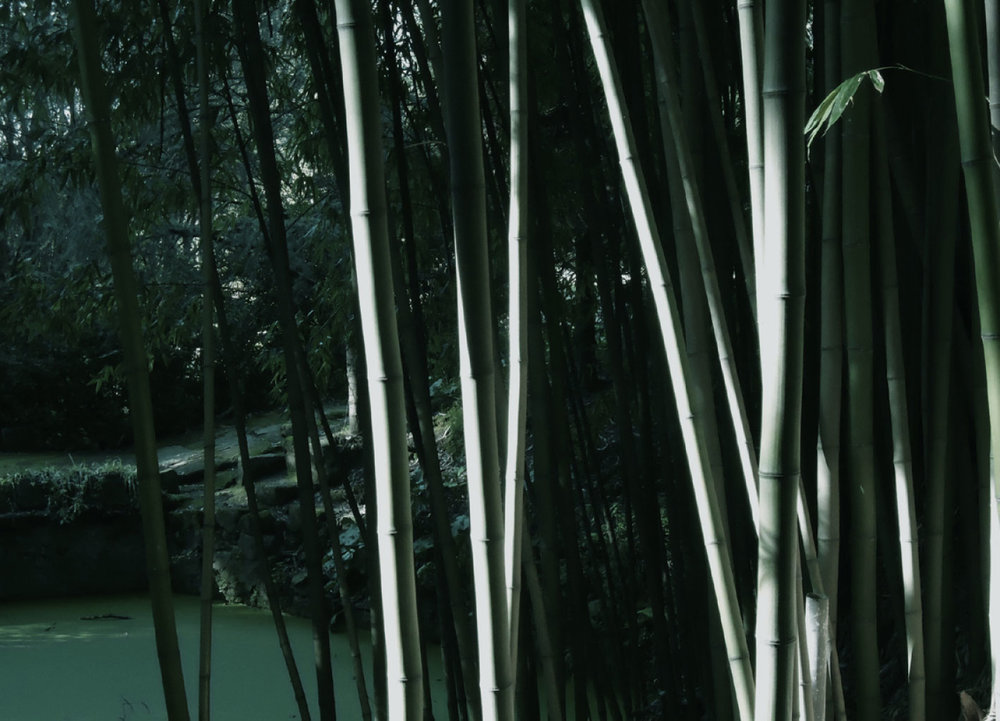 selva-urbana-16.jpg