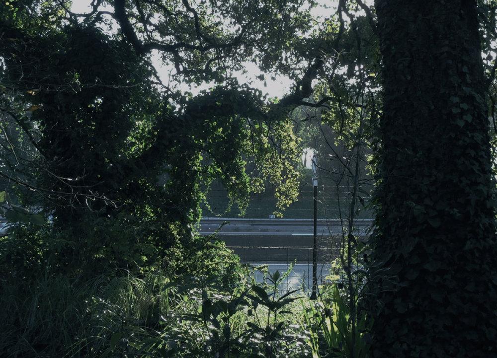 selva-urbana-19.jpg