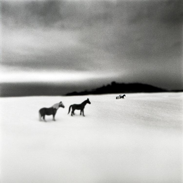 web_imaginary_horses.jpg