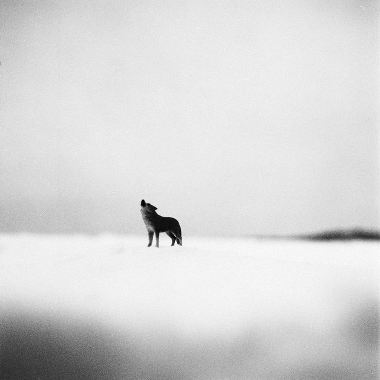 web_imaginary_wolf.jpg