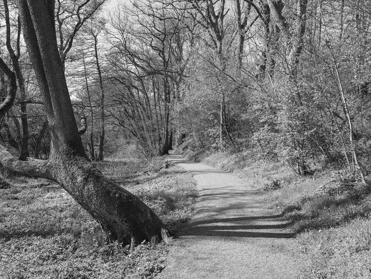 walk_150501.jpg