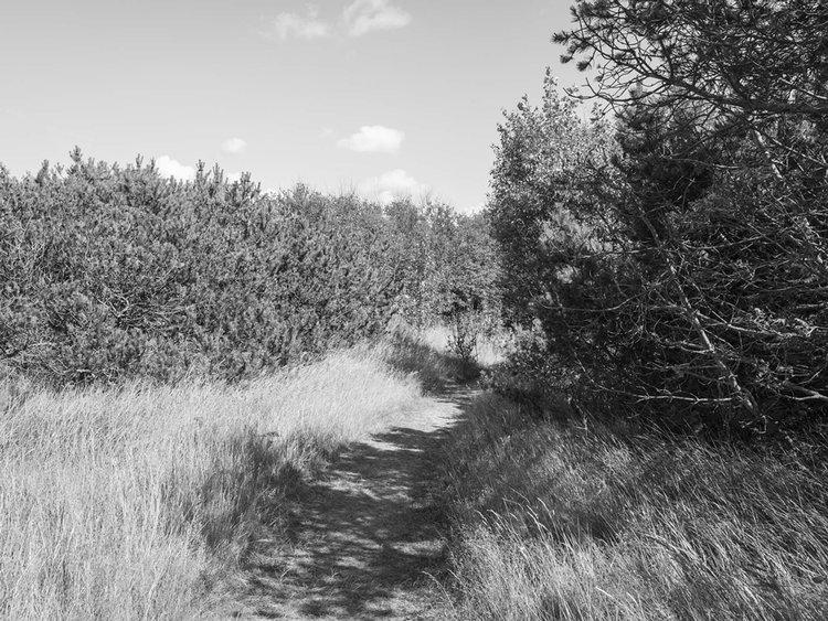 walk_150718.jpg