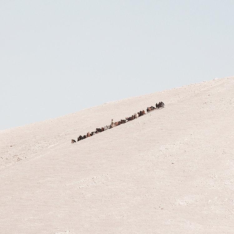 deadsea_desert_barbaraandale_06.jpg