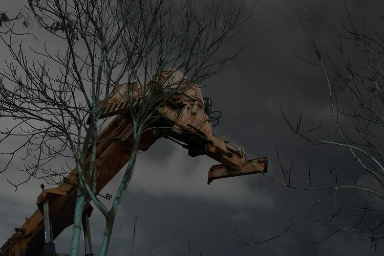 dark_tree-10.jpg