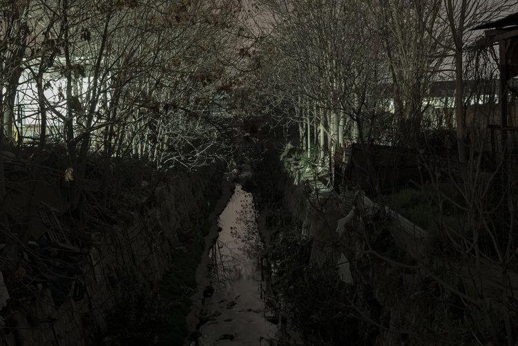 dark_tree-13.jpg