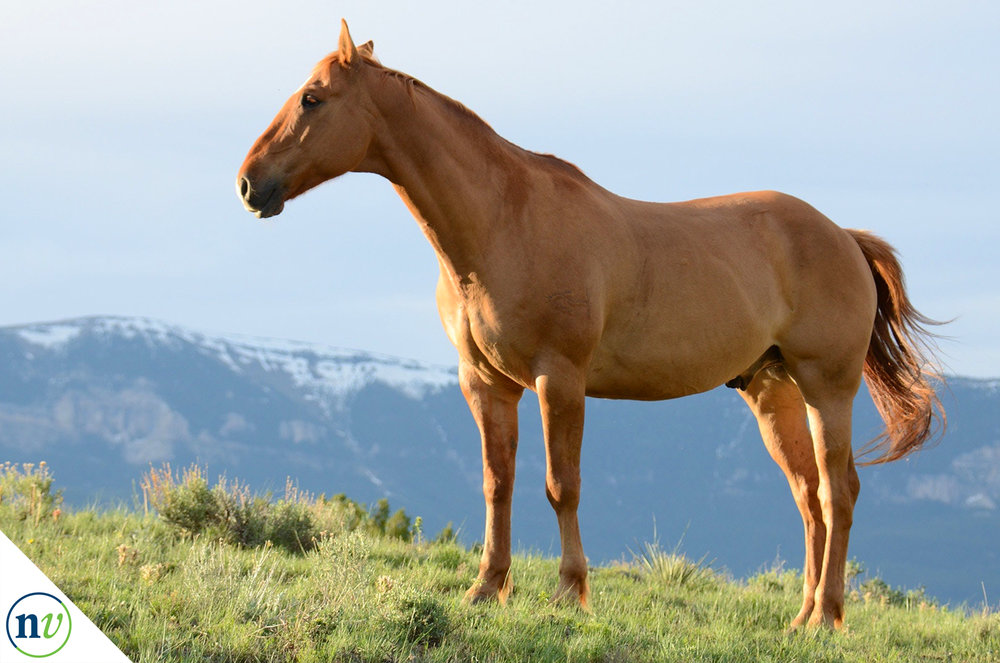 NostrilVet_horse_on_hill.jpg