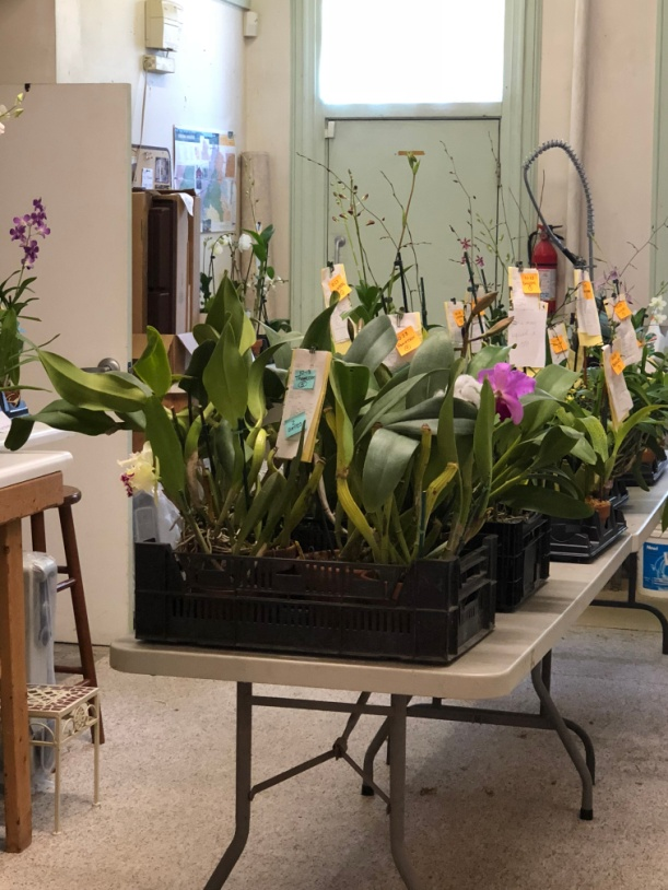 Orchids waiting for pickup in the back of the Belmont Ave shop