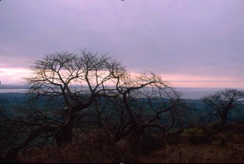 Larger dawn.png