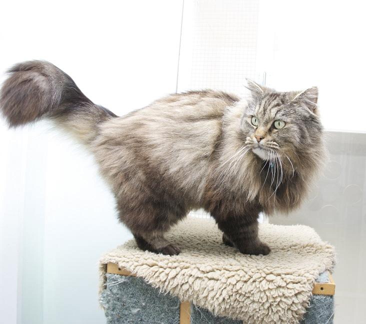 UVG Image Bank - Cat 21.jpg